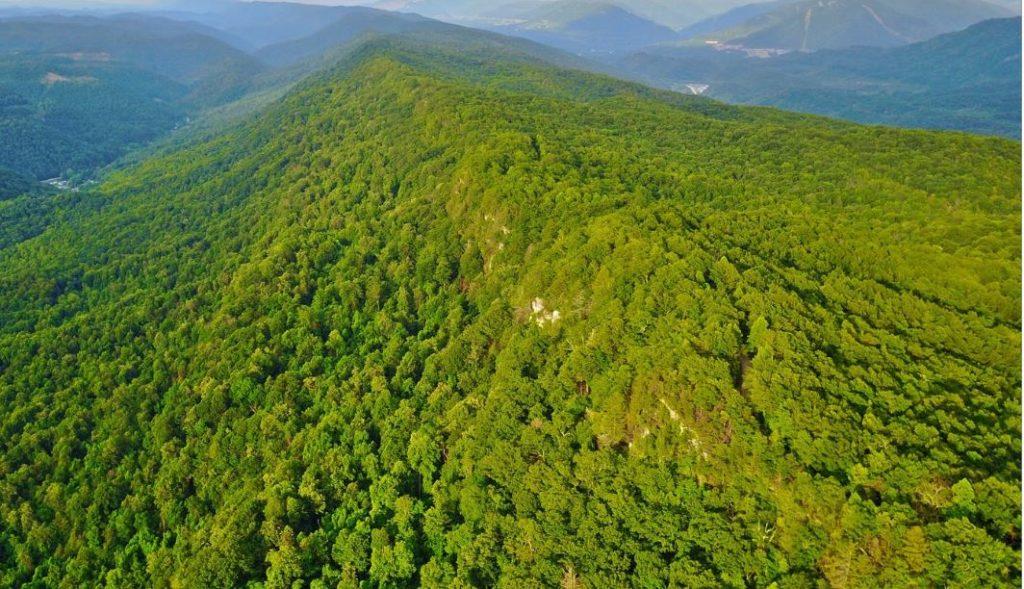 pine mountain kentucky natural lands trust knlt mountain association