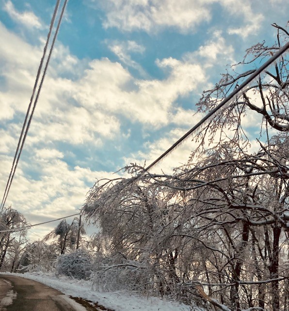 Trees hand on power lines in Boyd County, Kentucky, in FEbruary 2021 ice storm.